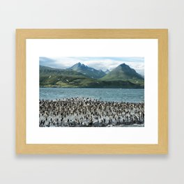 Colony of King Cormorants On Ilha Dos Passaros Located on the Beagle Channel, Tierra Del Fuego, Arge Framed Art Print