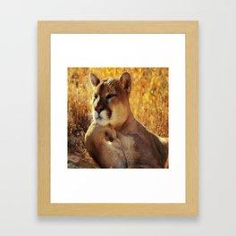 The Golden Thinker 🐾 Cougar 🐾 Framed Art Print