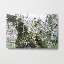 More Cherry Blossoms Metal Print