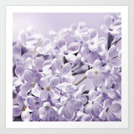 Lilacs  0107 Art Print