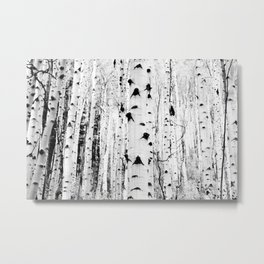 Black and White Aspen Trees Metal Print