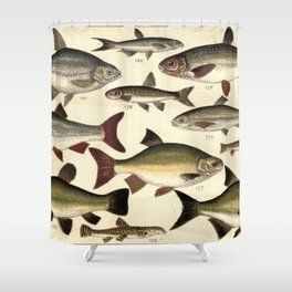 Vintage Illustration of Various Fishes (1902) Shower Curtain