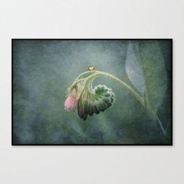 Do Ladybirds sleep at night? Canvas Print