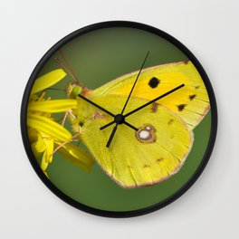 Colias Croceus | Butterfly Wall Clock