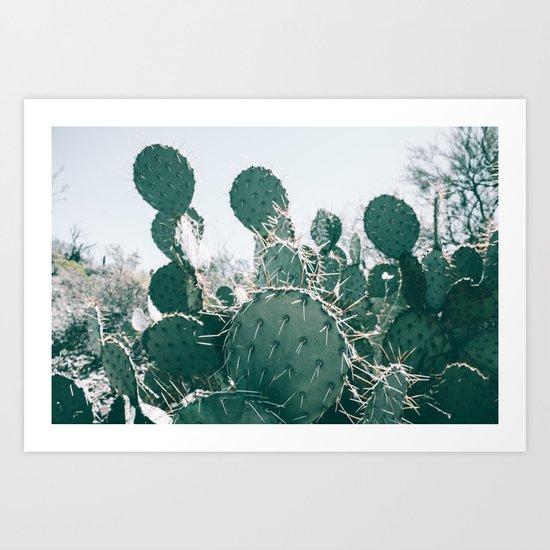 Arizona Cactus II Art Print