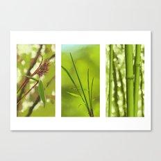 Bambus Canvas Print