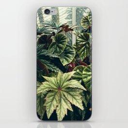 Beautiful Begonias iPhone Skin