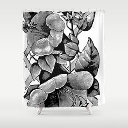 Cobaea scandens 1899 Shower Curtain