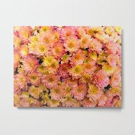 Pink Yellow and Orange Chrysanthemums Metal Print