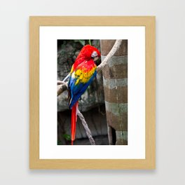 The Real Macaw Framed Art Print