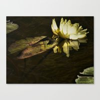 beth hoeckel Canvas Prints featuring Lily Beth by gymmybob