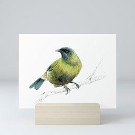 Korimako, the Bellbird Mini Art Print
