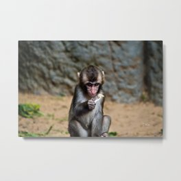 Japanese Macaque Monkey Metal Print