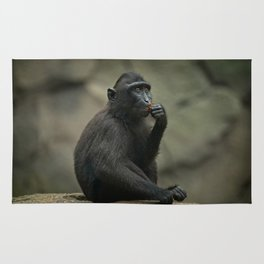 Celebes Crested Macaque Youngster Rug