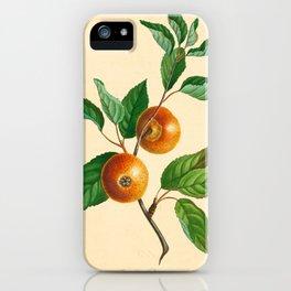 Th Loan Pearmain (1811) iPhone Case