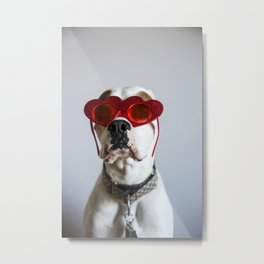 Boxer with love eyes 01 Metal Print