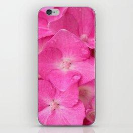 hydrangea bloom iPhone Skin