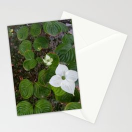 Emergence, 2018 from Roberta Winters Photography Stationery Cards