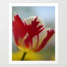Multi-Color Tulip for a Mom Art Print