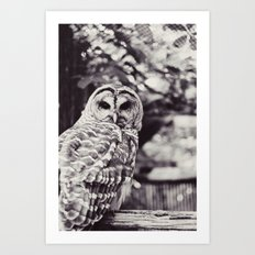 Owl Love Art Print