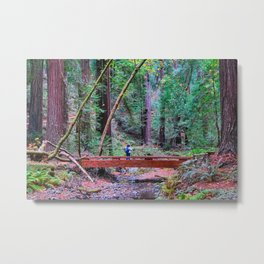 Hiker in Redwood Forest Metal Print