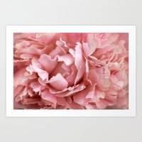 peony Art Prints featuring Peony by Cindi Ressler Photography