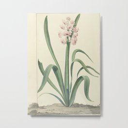 The pink hyacinth Rex Rubrorum, Jan Augustini, 1762 Metal Print