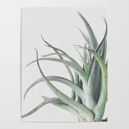 Air Plant II Poster