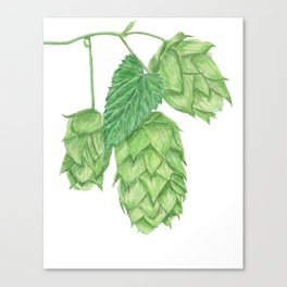 Beer Hop Flowers Canvas Print
