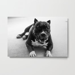Dog by Timothy Perry Metal Print