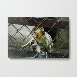 Monkey in Ninh Binh Metal Print