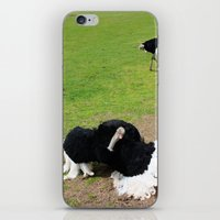 ostrich iPhone & iPod Skins featuring ostrich by Ezgi Kaya