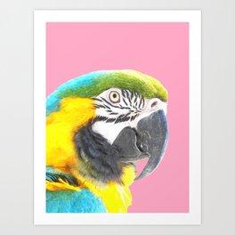 Macaw Portrait Pink Background Art Print