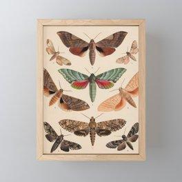 Vintage Natural History Moths Framed Mini Art Print