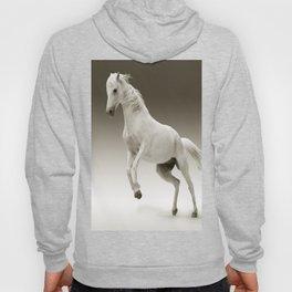 Magestic Horse Hoody