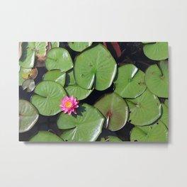 Pink Flower in the Pond Metal Print