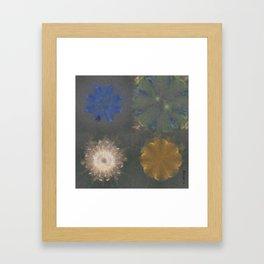 Pajama Constitution Flower  ID:16165-101448-73620 Framed Art Print