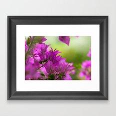 Beautiful  Brazilian flower 218  Framed Art Print