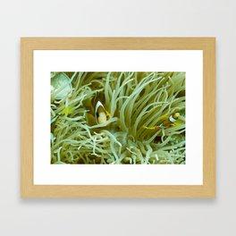 Spaghetti anemone and clownfish Framed Art Print