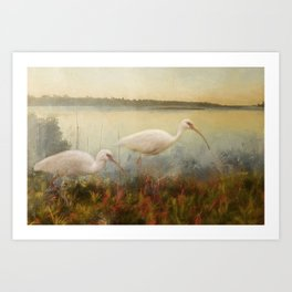 North Carolina Ibis Art Print