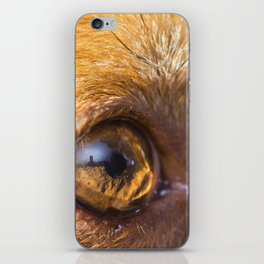 Eye details of a brown dog iPhone Skin