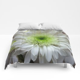 Daisy Reflection Comforters
