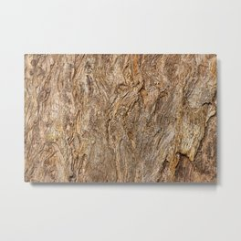 Eucalyptus microcorys Metal Print