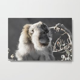 King of the Mountain Metal Print