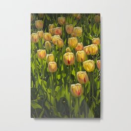 Yellow Tulip Flowers on Windmill Island in Holland Michigan during Tulip Time Festival Metal Print