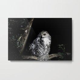 Fine Art Owl Metal Print