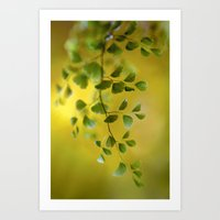fern Art Prints featuring Fern by Mandy Disher