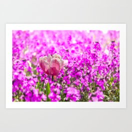 Ageing Purple Tulip in a Bed of Purple Soft Flowers Art Print