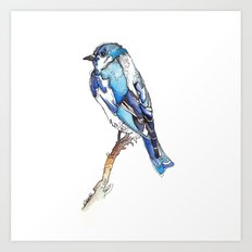 Mountain Bluebird Art Print