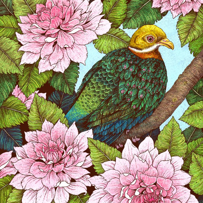 Whistling Fruit Dove in Spring Comforters